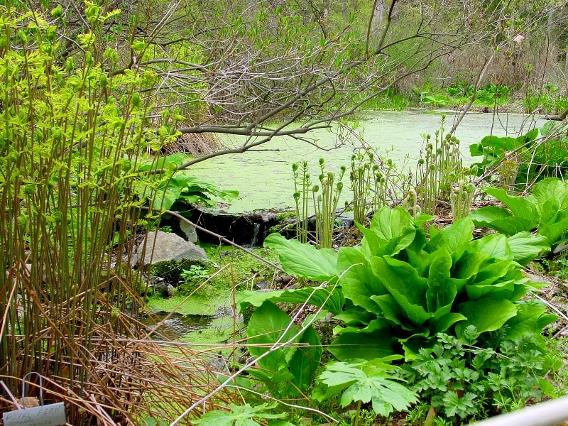 wildflowers « PPL Environmental Preserves