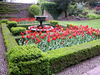 Fountain and Tulips, Bourton House Garden