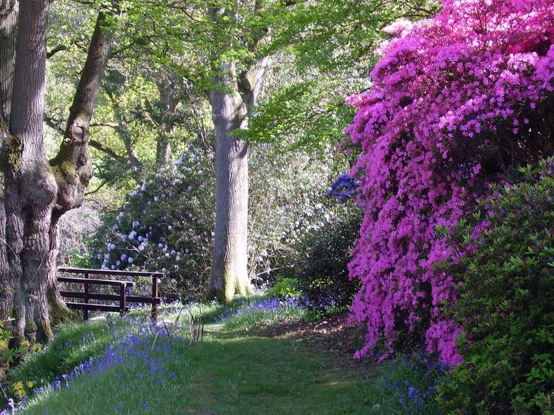 High Beeches Garden, West Sussex