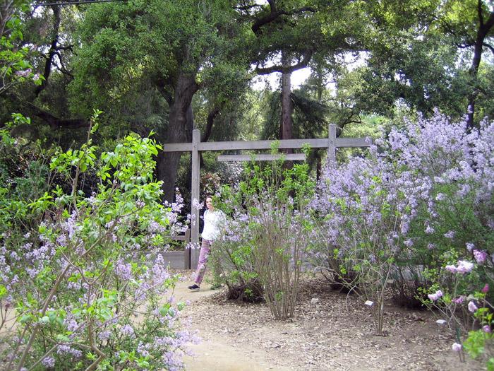 Gardens photograph descanso gardens photograph descanso gardens
