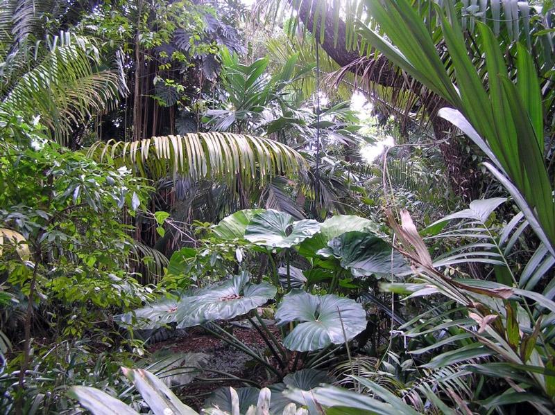 Photograph oxford botanica adam hodge photograph oxford botanica adam