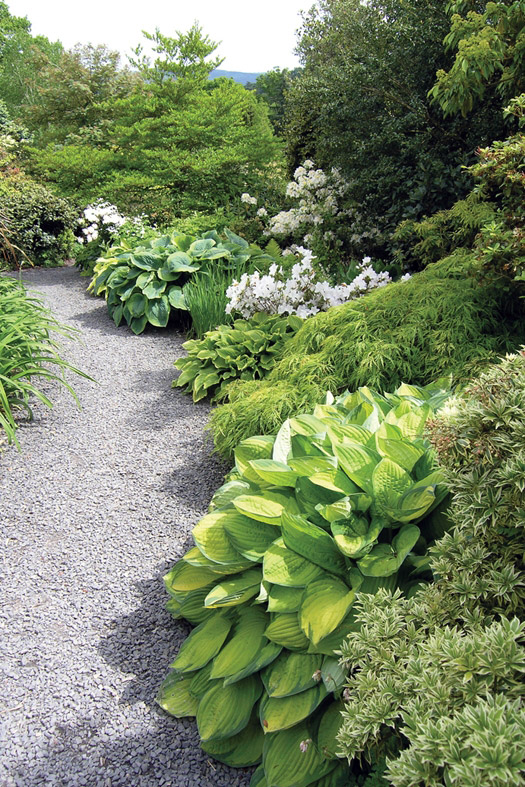 Hostas, The Dingle