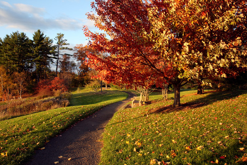 Autumn, Cornell Plantations