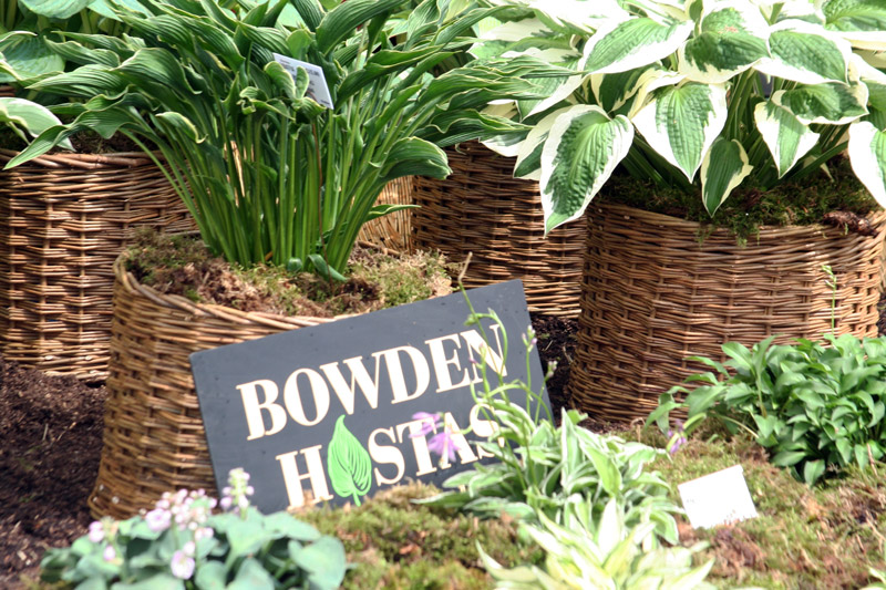 Bowden Hostas, Devon