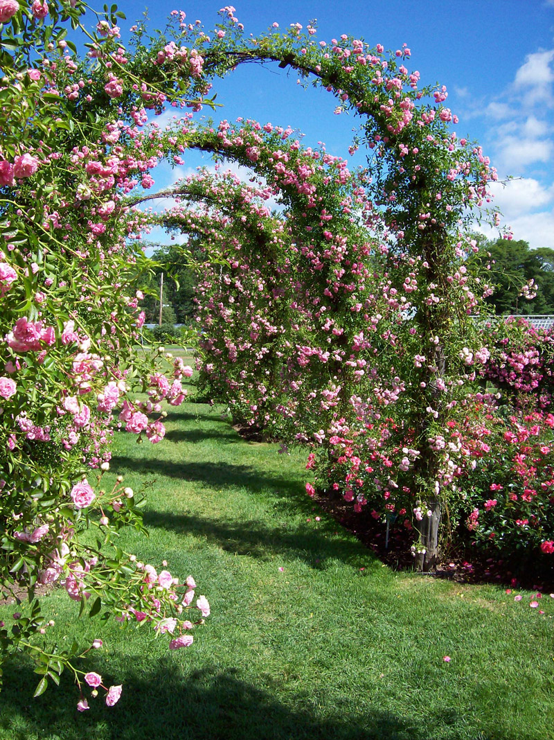 Rose Garden | 800 x 1068 · 541 kB · jpeg