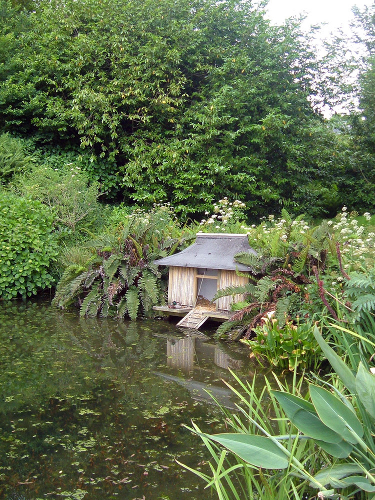 Pond, Carwinion Gardens