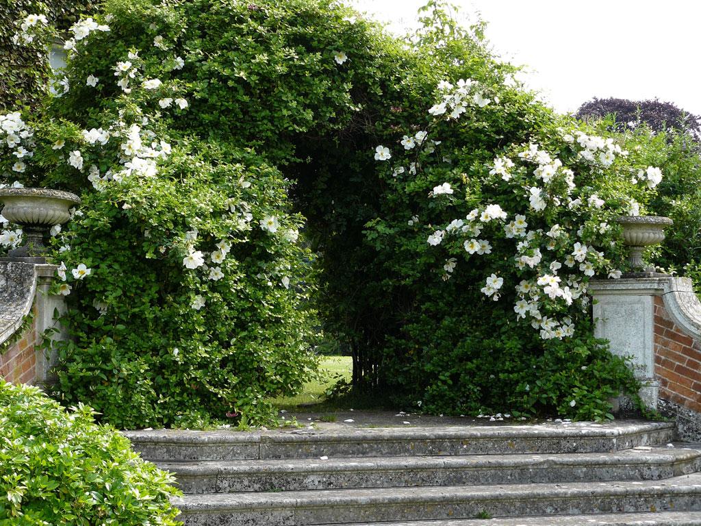Euston Hall Garden, Suffolk