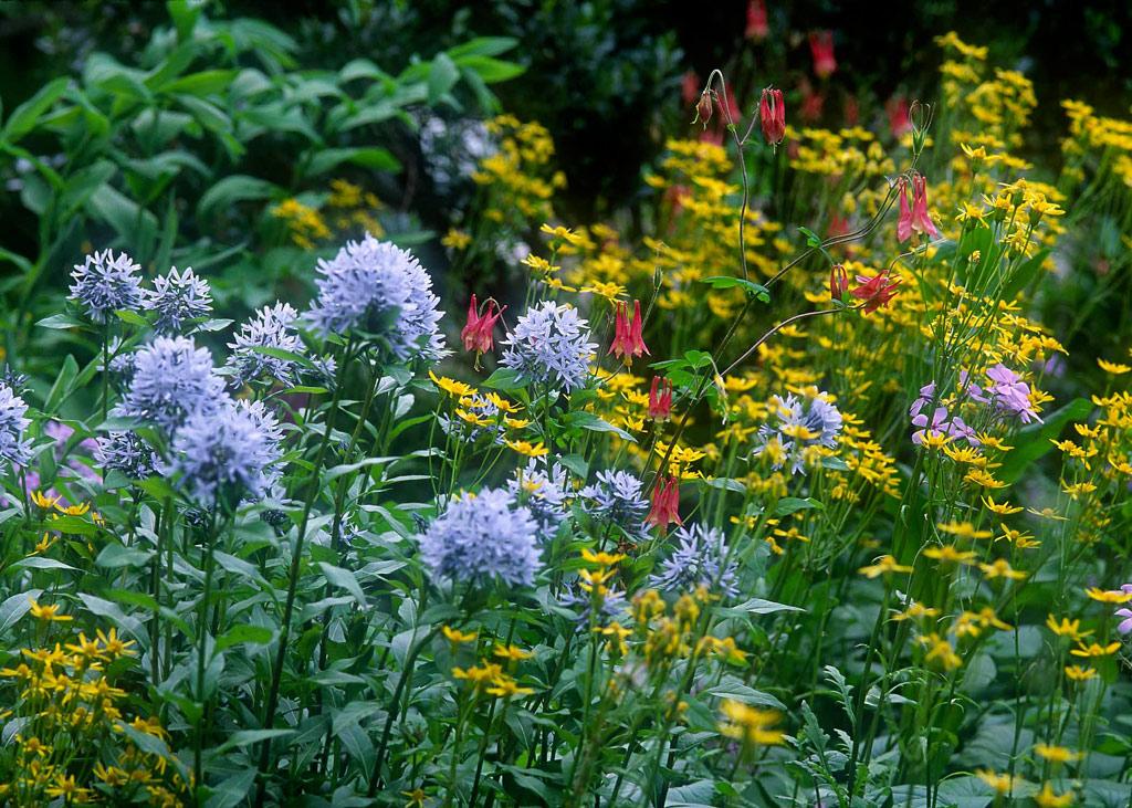 Planting a wildflower meadow - Au jardin - L'Atelier Vert