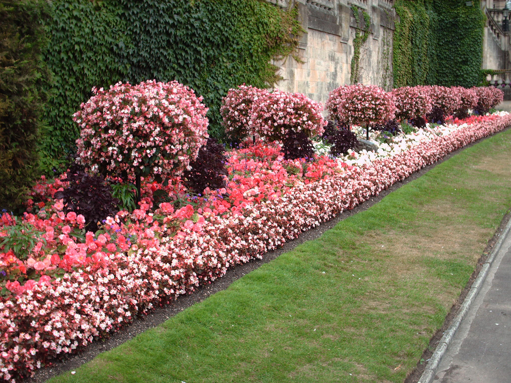 Bedding in Parade Gardens