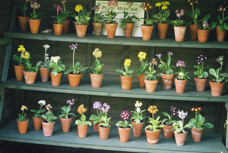 Auricula Theatre, Pops Plants
