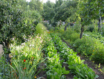 Traditional orchard planting in france with fruit trees flowers and