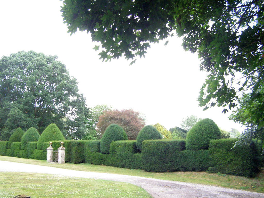 Yew Hedge, Heale Garden